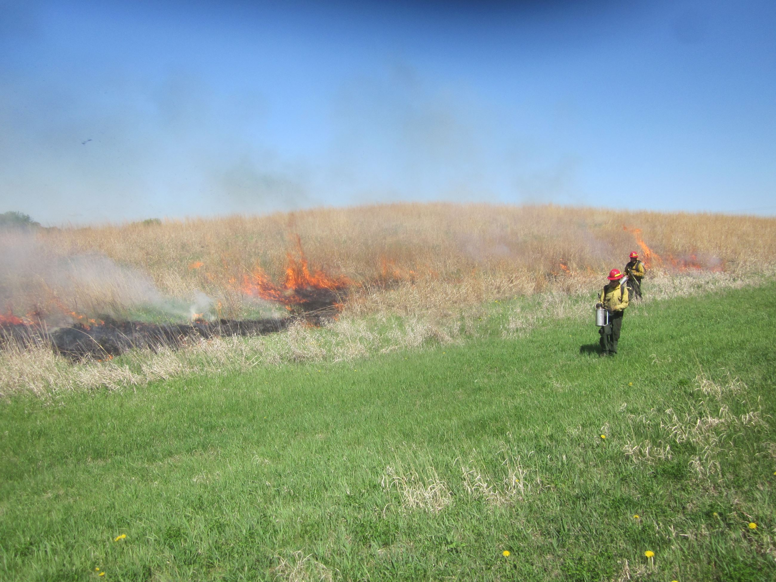 Prescribed Burns to Manage Prairie Grasses